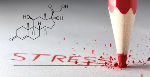 Содержание кортизола в крови
