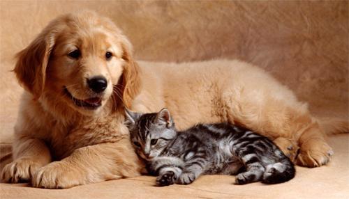 Животные и ребенок дома