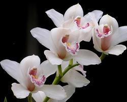 Дарим орхидеи