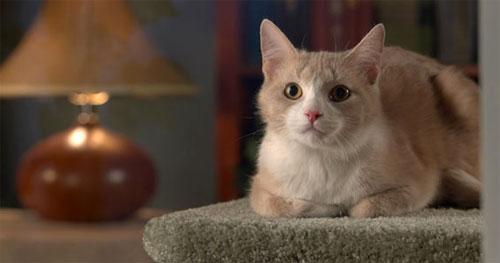 Важные условия содержания кошек в доме