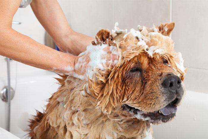Уход за собакой: надобность и особенности