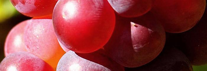 Виноград в косметологических средствах