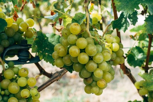 Как выбрать белое сухое вино?